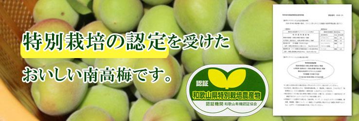 特別栽培認定の美味しい梅