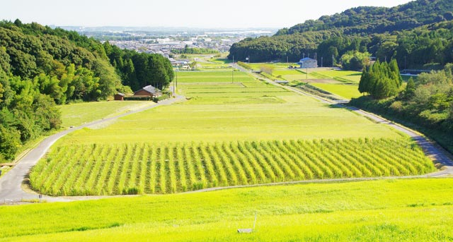 菰野町風景