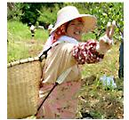 久木元農園