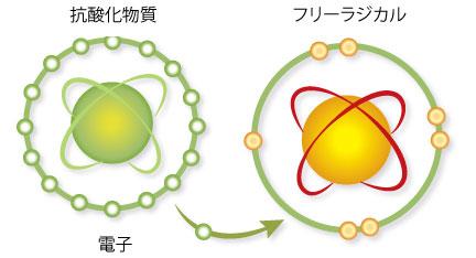 ウコンの抗がん作用と、活性酸素除去作用