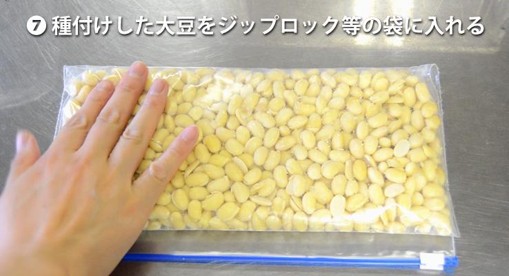 種付けした大豆を穴の開いたジップロックに入れる