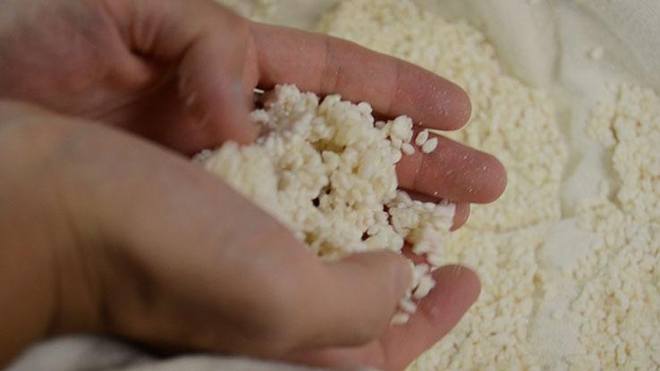種麹の販売