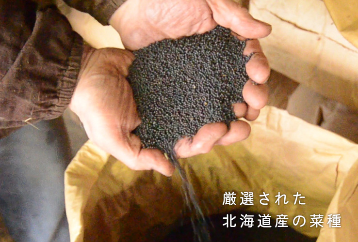 北海道産の菜種
