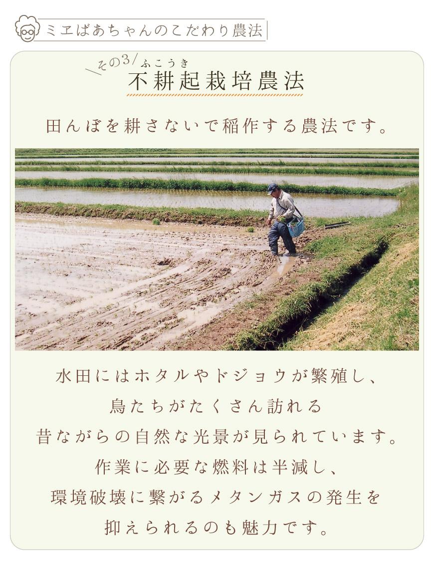 不耕起栽培農法でガスの発生をおさえています。