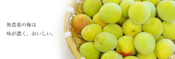 無農薬の梅は、味が濃く美味しい