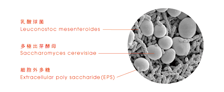 ウエダ家の自然発酵乳酸菌