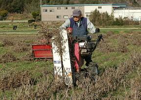 バインダーで刈り取ります