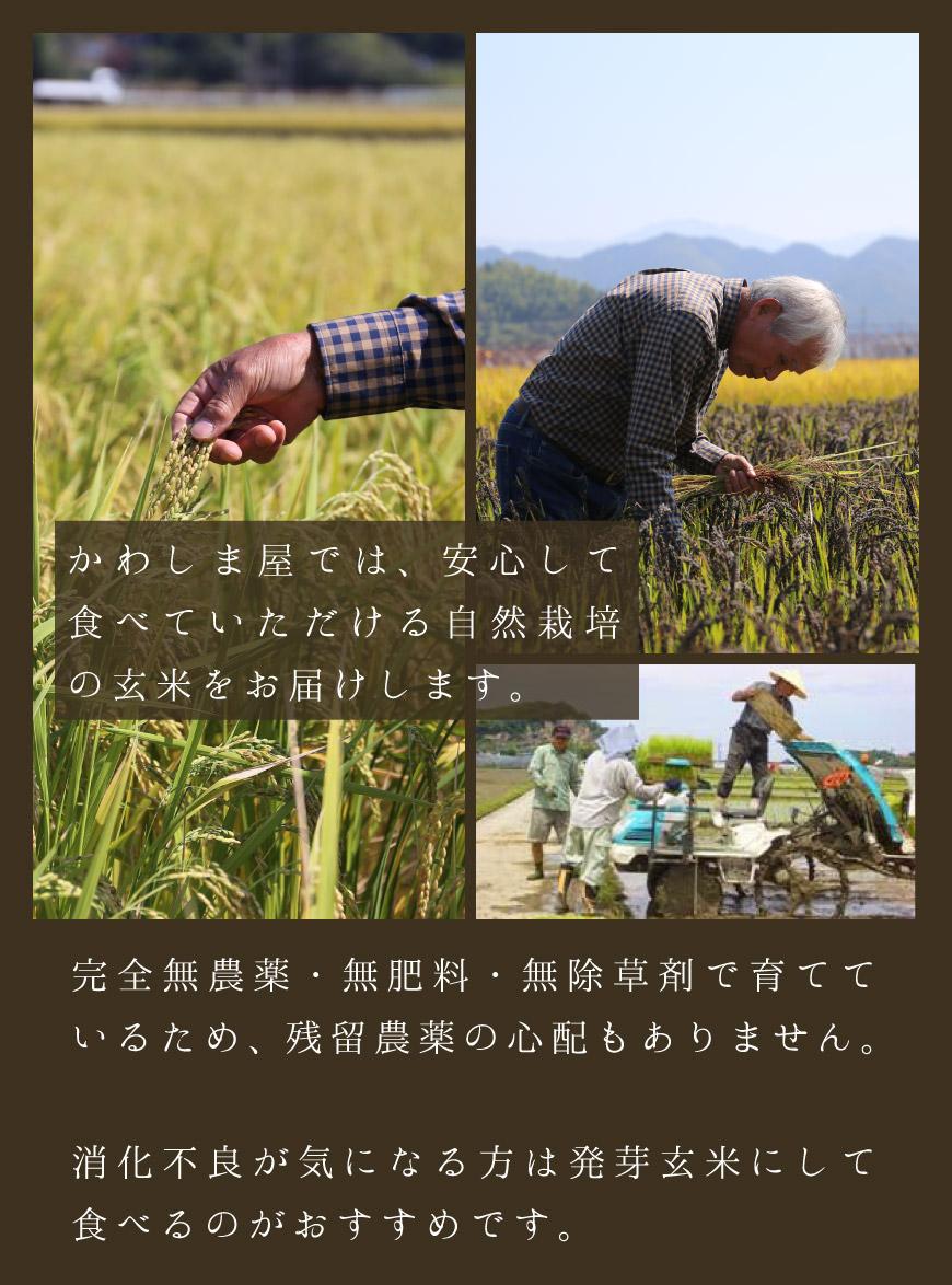 かわしま屋では安心して食べていただける自然栽培の玄米をお届けします