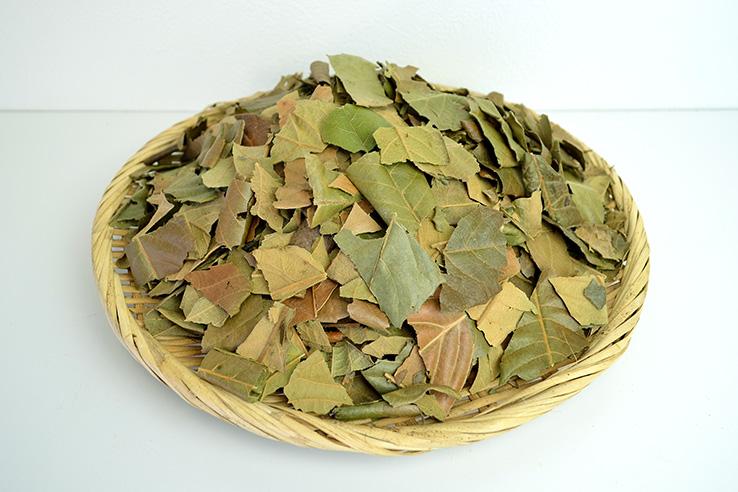 びわの葉乾燥