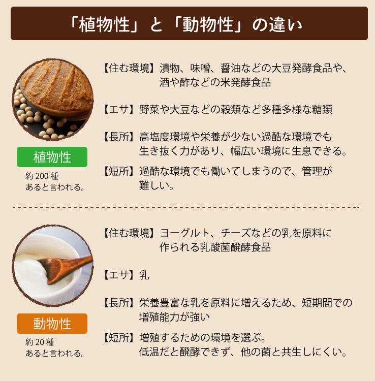 植物性乳酸菌・動物性乳酸菌の違い