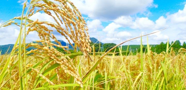 スーパー酵素の原材料と栄養素