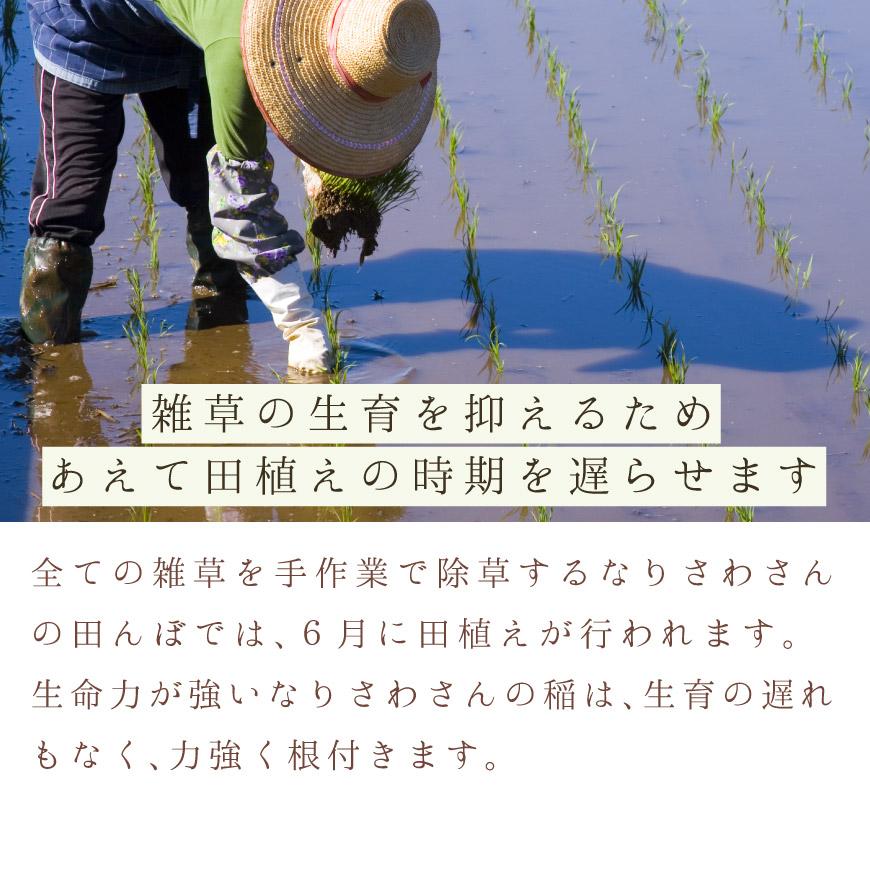 雑草の生育を抑えるためあえて田植えの時期を遅らせます