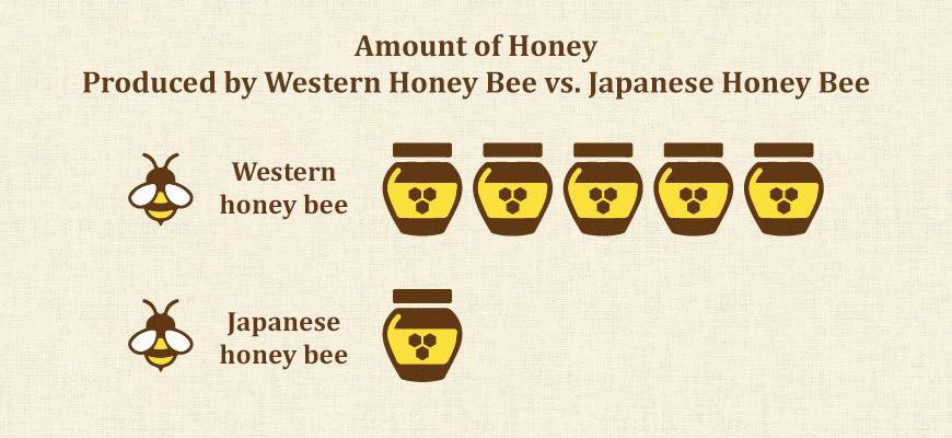 Kawashimaya Pure Honey by Japanese Bee