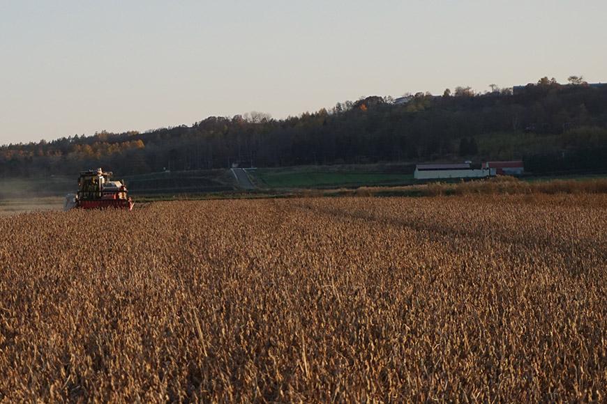 Black Soybean Farm