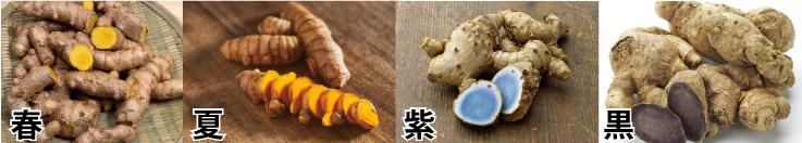 春ウコン(キョウオウ/姜黄)と秋ウコン(鬱金、ターメリック)、紫ウコン(ガジュツ)、そして黒ウコン(クラチャイダム)