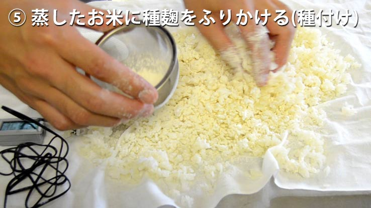 蒸したお米に種麹をふりかける(種付け)