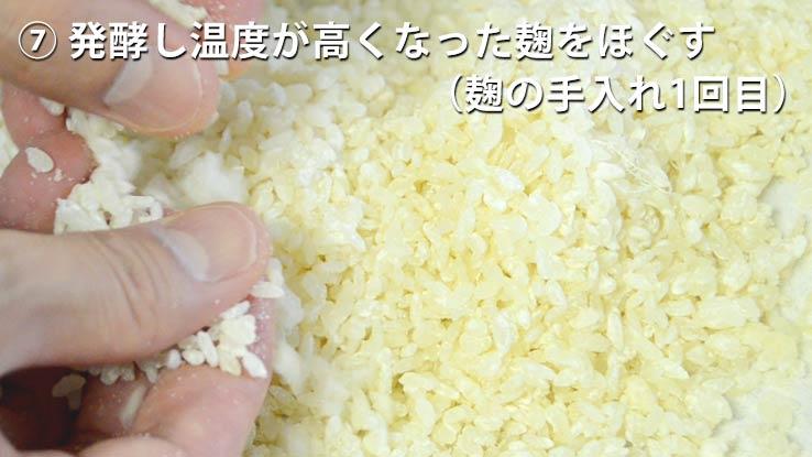 発酵し温度が高くなった麹をほぐす(麹の手入れ1)