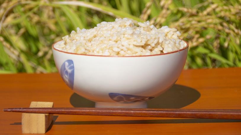 bowl_brown_rice