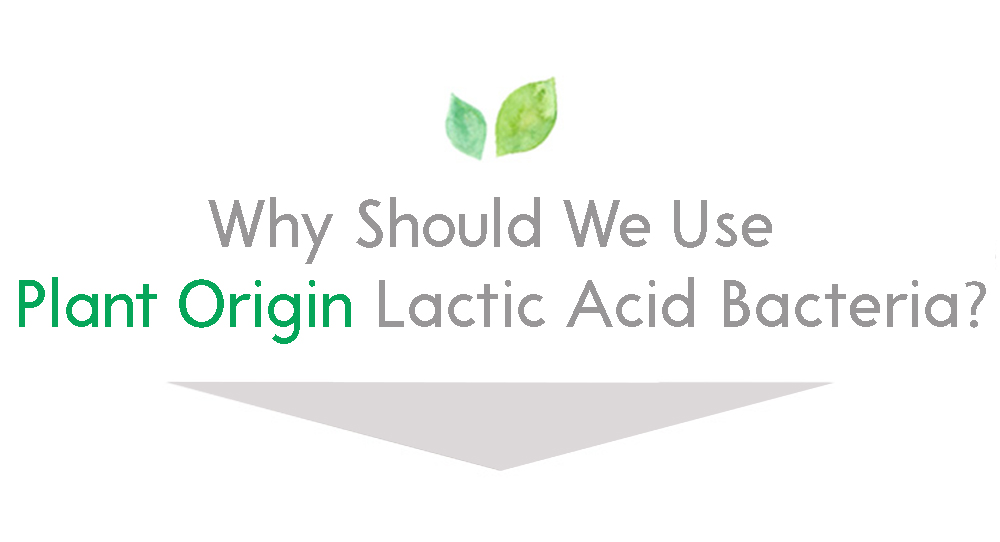 why should you consume lactic acid bacteria