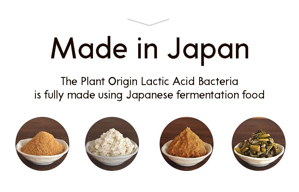 Kawashimaya lactic acid bacteria powder