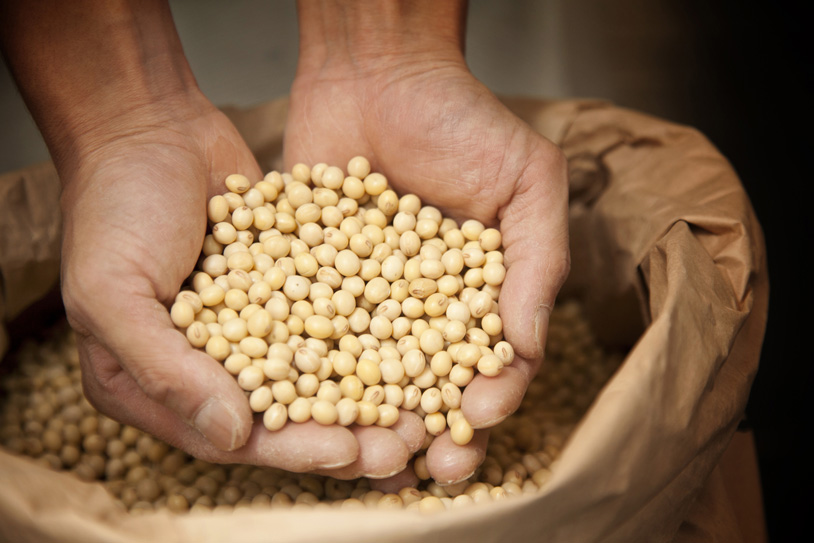 Tamari Sauce from soybeans