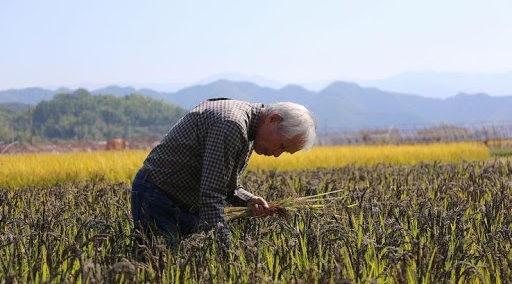 自然農法の重要性