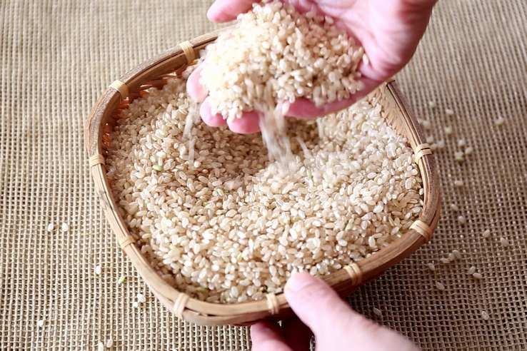 玄米の選び方まとめ
